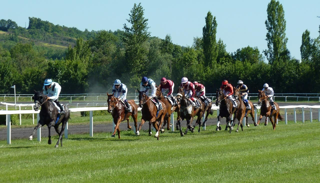 paardenraces